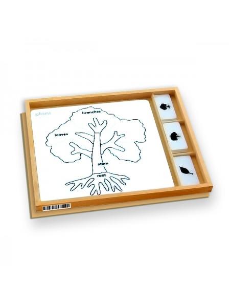 Botany Puzzle Activity (Plant)