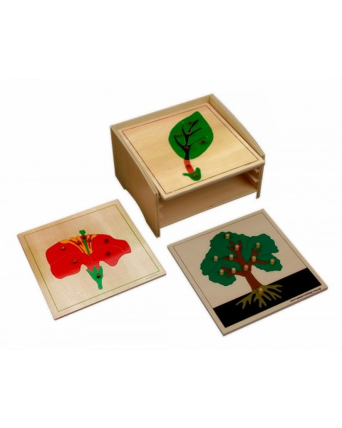 Botany Puzzle Cabinet with 3 Puzzles